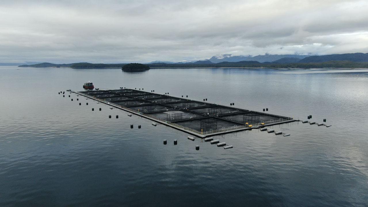 ¿Qué se sabe de las microalgas que han estado afectando a la producción de salmónidos?